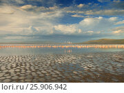 Купить «Lake nakuru landscape with many feeding Greater Flamingos, Kenya», фото № 25906942, снято 12 декабря 2019 г. (c) BE&W Photo / Фотобанк Лори