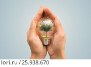 Купить «hands holding light bulb with tree inside», фото № 25938670, снято 3 июня 2016 г. (c) Syda Productions / Фотобанк Лори