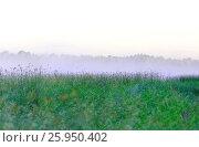Купить «Утренний туман над озерной осокой,как фон», фото № 25950402, снято 15 августа 2013 г. (c) Круглов Олег / Фотобанк Лори