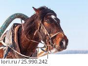 Купить «Голова лошади с хомутом и упряжью в зимний день», фото № 25990242, снято 23 февраля 2019 г. (c) FotograFF / Фотобанк Лори