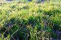 Morning grass, фото № 26004042, снято 2 апреля 2017 г. (c) Владимир Арсентьев / Фотобанк Лори
