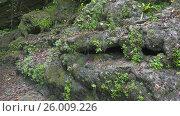 Spring flowing over a moss-covered rock Caucasus. Стоковое видео, видеограф Михаил Коханчиков / Фотобанк Лори