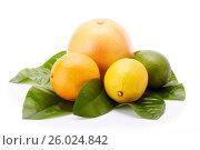 Купить «Different ripe citrus fruit.», фото № 26024842, снято 4 августа 2016 г. (c) Мельников Дмитрий / Фотобанк Лори