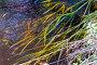 Холодный ручей с травой на берегу, фото № 26026402, снято 29 августа 2015 г. (c) Евгений Ткачёв / Фотобанк Лори