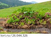 Купить «Profitable natural hotbed in open countryside», фото № 26044326, снято 25 июня 2019 г. (c) easy Fotostock / Фотобанк Лори
