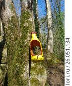 Купить «Кормушка для птиц на дереве в лесу», фото № 26051134, снято 3 апреля 2017 г. (c) DiS / Фотобанк Лори