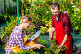Man and woman working on a plantation in a greenhouse, фото № 26054374, снято 15 июля 2016 г. (c) Константин Лабунский / Фотобанк Лори