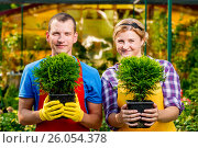 Купить «Professional gardeners team with seedlings in the greenhouse», фото № 26054378, снято 15 июля 2016 г. (c) Константин Лабунский / Фотобанк Лори