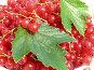 Красная смородина в белой тарелке, фото № 26062494, снято 26 июля 2009 г. (c) Анатолий Заводсков / Фотобанк Лори