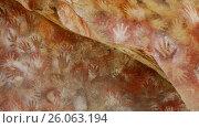 The famous series of caves Cueva de Las Manos paintings in his hands. (2017 год). Редакционное видео, видеограф Яков Филимонов / Фотобанк Лори