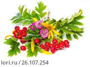 Купить «Hawthorn, flowers and clover», фото № 26107254, снято 4 сентября 2011 г. (c) Анна Гучек / Фотобанк Лори