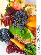 Купить «Autumn fruits and vegetables», фото № 26107262, снято 17 сентября 2012 г. (c) Анна Гучек / Фотобанк Лори