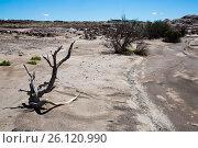 Купить «Desert landscape of province of La Rioja», фото № 26120990, снято 13 февраля 2017 г. (c) Яков Филимонов / Фотобанк Лори