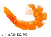 Купить «Tiger shrimp, prawn isolated on a white background, macro», фото № 26122966, снято 17 января 2019 г. (c) Oksana Zh / Фотобанк Лори