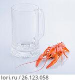 Купить «Red crayfish with an empty beer glass on white background», фото № 26123058, снято 18 октября 2015 г. (c) Oksana Zh / Фотобанк Лори