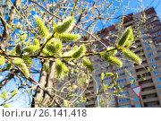 Купить «Весенний пейзаж на фоне недвижимости и неба», фото № 26141418, снято 12 апреля 2017 г. (c) Сергеев Валерий / Фотобанк Лори