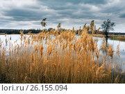 Купить «Болотистая область старого озера», фото № 26155094, снято 8 апреля 2017 г. (c) виктор химич / Фотобанк Лори