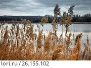 Купить «Болотистая область старого озера», фото № 26155102, снято 8 апреля 2017 г. (c) виктор химич / Фотобанк Лори