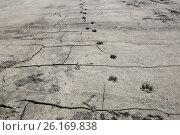 Следы на сыром песке. Стоковое фото, фотограф Александр Фролов / Фотобанк Лори