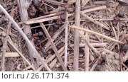Купить «Building anthill close up», видеоролик № 26171374, снято 13 июля 2016 г. (c) Gennadiy Iotkovskiy / Фотобанк Лори