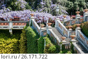 Royal staircase in castle blooming wisteria. Стоковое фото, фотограф Anton Chechotkin / Фотобанк Лори