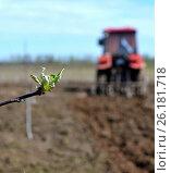 Tillage in garden in spring. Стоковое фото, фотограф Андрей Силивончик / Фотобанк Лори