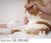 Купить «The hand of a child stroking a cat happy», фото № 26189642, снято 17 июля 2018 г. (c) Ирина Козорог / Фотобанк Лори