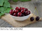 Купить «Red cherry», фото № 26220542, снято 24 июля 2015 г. (c) Надежда Нестерова / Фотобанк Лори