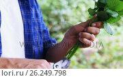 Купить «Man cutting flower stem in garden», видеоролик № 26249798, снято 22 ноября 2017 г. (c) Wavebreak Media / Фотобанк Лори