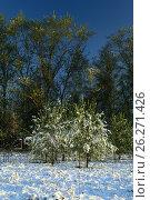 Купить «Снег 12 мая. Подмосковье», фото № 26271426, снято 12 мая 2017 г. (c) Mike The / Фотобанк Лори