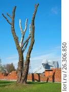 Купить «Брестская крепость. Монумент «Мужество»», фото № 26306850, снято 21 апреля 2017 г. (c) Дмитрий Грушин / Фотобанк Лори