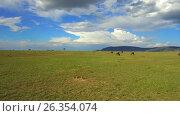 Купить «group of herbivore animals in savanna at africa», видеоролик № 26354074, снято 15 апреля 2017 г. (c) Syda Productions / Фотобанк Лори