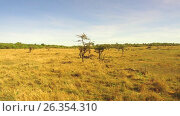 animals grazing in savanna at africa. Стоковое видео, видеограф Syda Productions / Фотобанк Лори