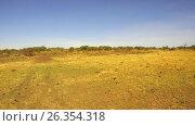 Купить «maasai mara national reserve savanna at africa», видеоролик № 26354318, снято 16 апреля 2017 г. (c) Syda Productions / Фотобанк Лори