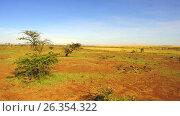 Купить «maasai mara national reserve savanna at africa», видеоролик № 26354322, снято 16 апреля 2017 г. (c) Syda Productions / Фотобанк Лори