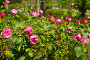 Variety of flowers in the fields, фото № 26367170, снято 14 апреля 2017 г. (c) Яков Филимонов / Фотобанк Лори