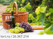 Купить «vine and grape bunches», фото № 26367214, снято 21 августа 2018 г. (c) Яков Филимонов / Фотобанк Лори