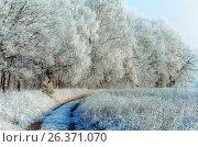 Winter Landscape With a Forest Path. Стоковое фото, фотограф Светлана Сухорукова / Фотобанк Лори