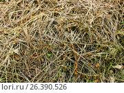 Купить «Background of dry grass», фото № 26390526, снято 20 июня 2019 г. (c) Наталья Баранова / Фотобанк Лори