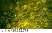 Купить «Freshly made soup. Top view close up.», видеоролик № 26392774, снято 31 января 2012 г. (c) Gennadiy Iotkovskiy / Фотобанк Лори