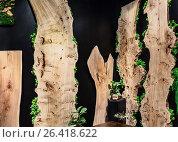 Купить «Натуральный стабилизированный мох и старые деревянные доски в современном дизайне интерьера с черными стенами», фото № 26418622, снято 25 мая 2017 г. (c) Светлана Васильева / Фотобанк Лори