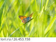 Orange butterfly. Стоковое фото, фотограф Тамара Наянова / Фотобанк Лори