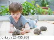 Купить «Little boy playing with hedgehog», фото № 26455938, снято 30 мая 2017 г. (c) Кирилл Греков / Фотобанк Лори
