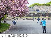 Купить «Женщина японка фотографирует ветки цветущей розовой сакуры. Восточный парк в Императорском дворце в Токио, Япония», фото № 26482610, снято 10 апреля 2013 г. (c) Кекяляйнен Андрей / Фотобанк Лори