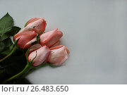 Букет розовых роз на белом фоне. Стоковое фото, фотограф Юлия Болоцкая / Фотобанк Лори