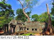 Angkor Thom, Cambodia, Angor Thom. Стоковое фото, фотограф McPHOTO/K. Steinkamp / age Fotostock / Фотобанк Лори