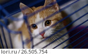 Купить «Homeless animals. Close-up shot of cute mongrel little kitty sitting in the cage at the animal shelter. HD», видеоролик № 26505754, снято 5 июня 2017 г. (c) ActionStore / Фотобанк Лори