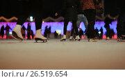 Купить «Moscow. Skating rink in the open air. People skate in the winter. Evening time. Christmas lights.», видеоролик № 26519654, снято 4 апреля 2017 г. (c) Mikhail Davidovich / Фотобанк Лори