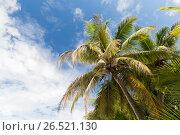 Купить «palm trees over blue sky», фото № 26521130, снято 10 февраля 2017 г. (c) Syda Productions / Фотобанк Лори