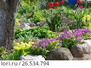 Купить «Оформление приствольного круга весенними цветами на садовом участке», эксклюзивное фото № 26534794, снято 27 мая 2017 г. (c) Елена Коромыслова / Фотобанк Лори